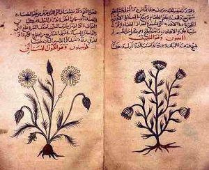 Phytotherapie gravure