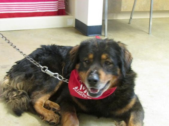 Hi there, my name is Everest. I came to the shelter as a stray on 1/10/14. I have been running with another dog for quite some time. Several people had reported me all over town but I finally gave in and came to the shelter. And you know what?  I am...
