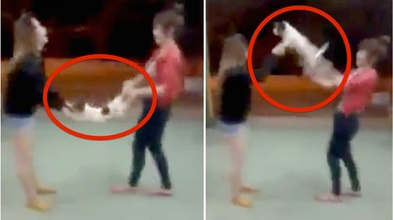 Mean girls filmed swinging and hurling small dog around on and on while laughing! Act Now!
