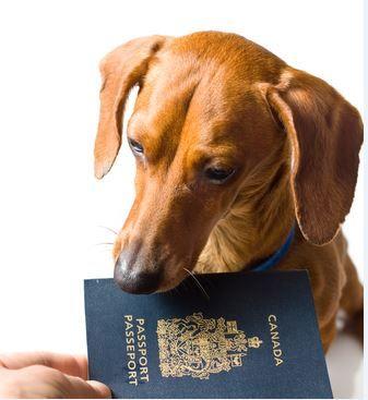 Os cães e gatos terão passaporte para viagens nacionais e internacionais