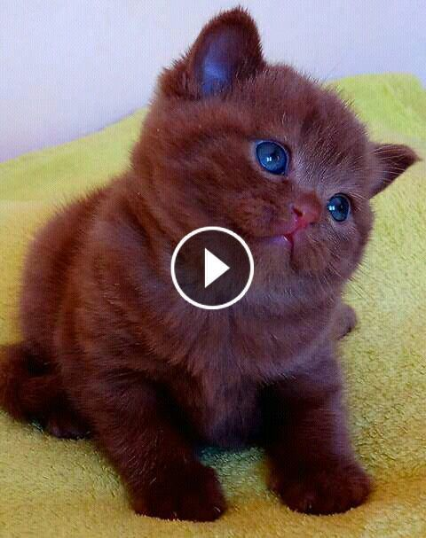Video Funny Cats And Kittens Meowing Compilation 6i3d1rtm40 In