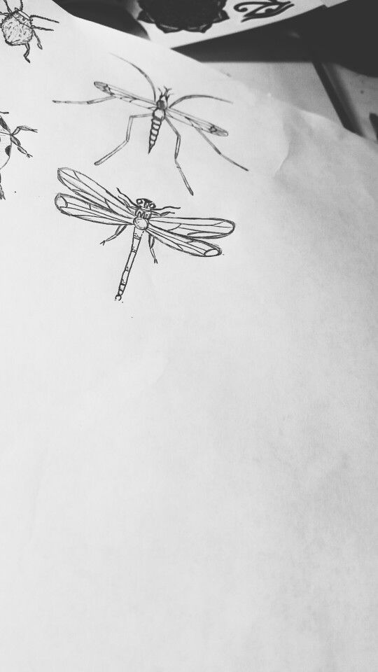 #insects #fly #draw #art