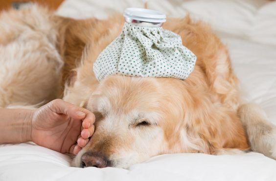 Vomiting And Diarrhea In Dogs Diarrhea In Dogs Dog Has Diarrhea