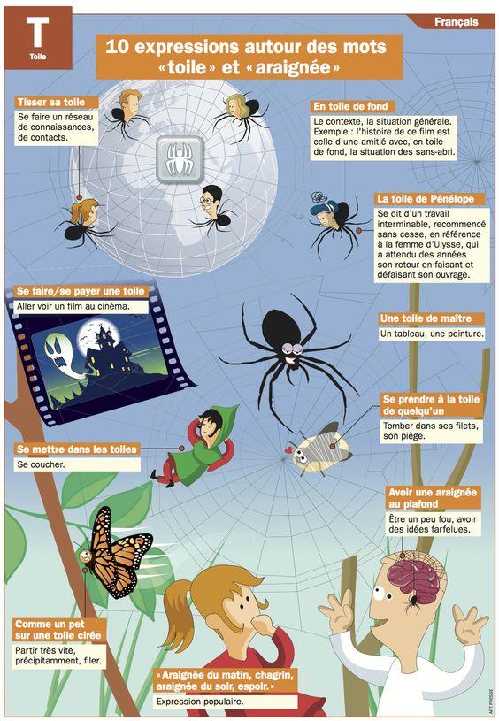 """10 expressions autour des mots """"toile"""" et """"araignée"""":"""