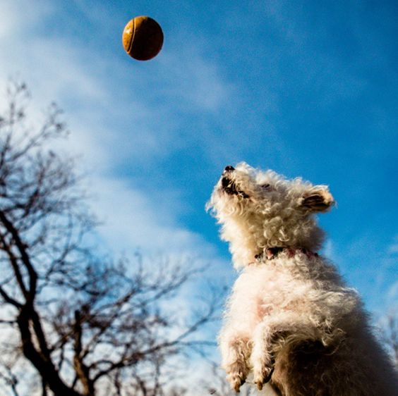 Here it comes! - Georgetown Bark Park - Georgetown, TX - Angus Off-Leash #dogs #puppies #cutedogs #dogparks #georgetown #texas #angusoffleash: