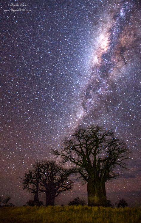 Baobab Milkyway by Hendri Venter: