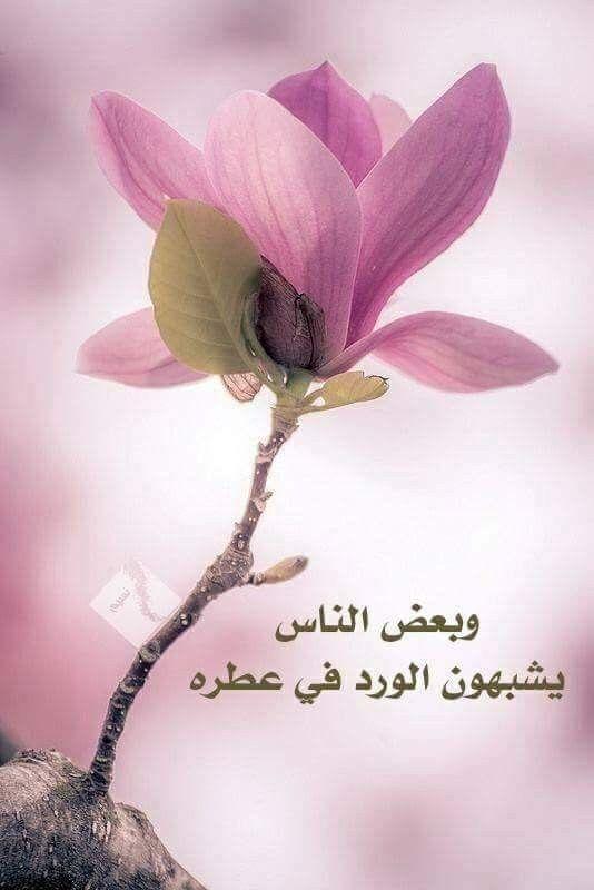وبعض الاشخاص تتلون الحياة معهم بلون الورد ننسى هموم الحياة بوجودهم يبهجون القلب ويبقى Beautiful Morning Messages Beautiful Morning Morning Messages