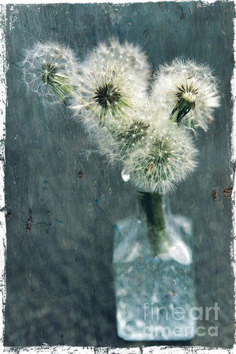 Dandelions by Sophie Vigneault