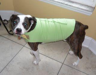 Thunder Shirt Knockoff Thunder Shirt Dog Shirt Design Dog