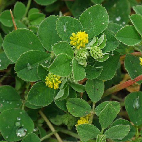 Unkraut Und Wildpflanzen Pflanzen Unkraut Pflanzenblatter