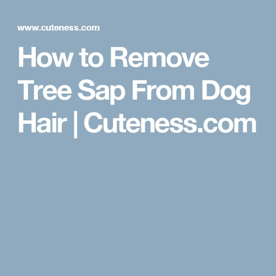 How to Remove Tree Sap From Dog Hair | Cuteness.com