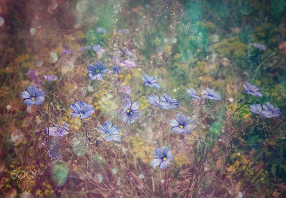 my garden by Tanya   Markova - Nya on 500px