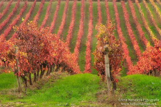 Helio-Cristovao-Alenquer-Vila-Portugal-Outono-Paisagem-Cultura-6429