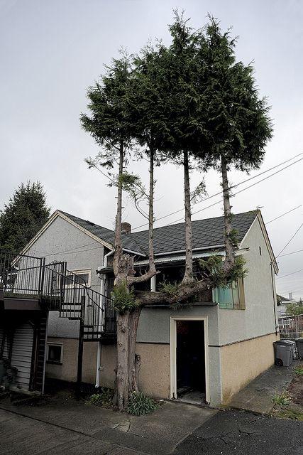 Trees on a tree: