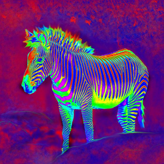Neon Zebra Painting  - Neon Zebra Fine Art Print