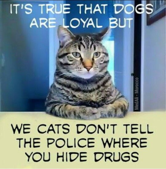 Pin By F M L On L O L W T F Funny Cat Jokes Funny Animal Pictures Funny Animal Photos