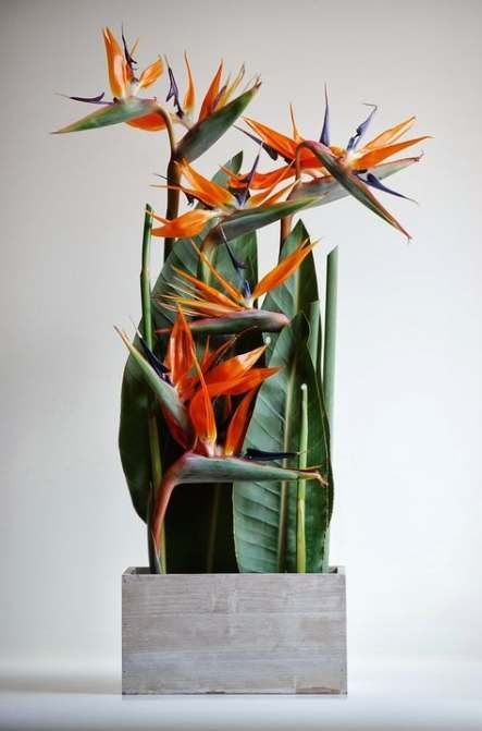 41 Best Ideas Garden Tropical Ideas Bird Of Paradise #garden