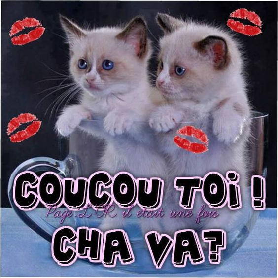 Coucou toi ! Cha va? #coucou chats chatons tasse bol mignons rigolo bisous