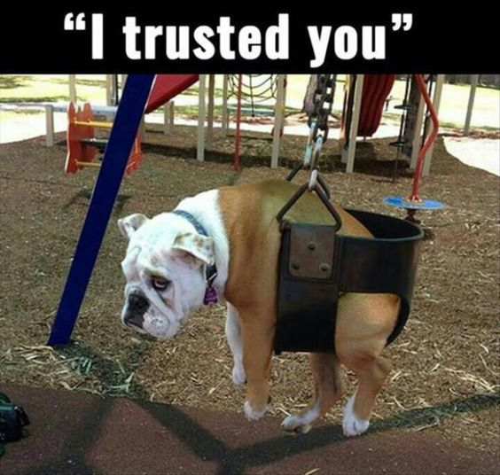 20 Funny Animal Pics for Your Friday