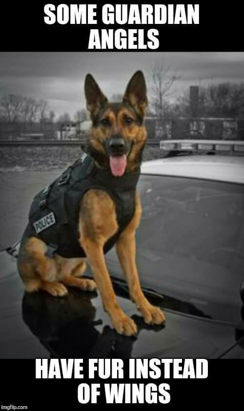 So Wahr Wahr Check More At Https Gift Marsiner Com 2019 07 09 So Wahr 3 Military Dogs Military Working Dogs Police Dogs