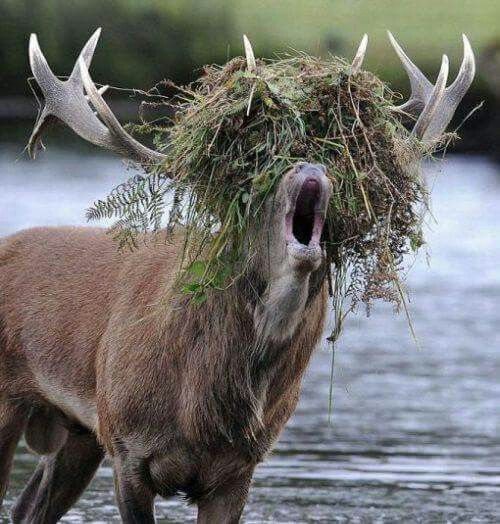 Now this is a bad hair day...