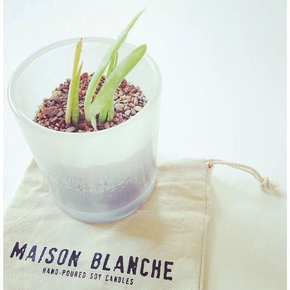The easiest way to #reuse your Maison Blanche candle jar! ♻️ #mymaisonblanche #recycle #garden #succulent #plant #greenthumb