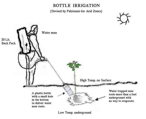Bottle irrigation - Micro-irrigation — Wikipédia