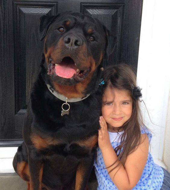 This is my human. Hurt her and I'll make sure you will never be found. Big beautiful rottie: