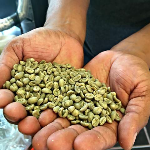Darwin of Theodore's Coffee shows Local Universe green beans in Michigan. His coffees benefit the Micah House in Honduras. www.explorelocaluniverse.com.