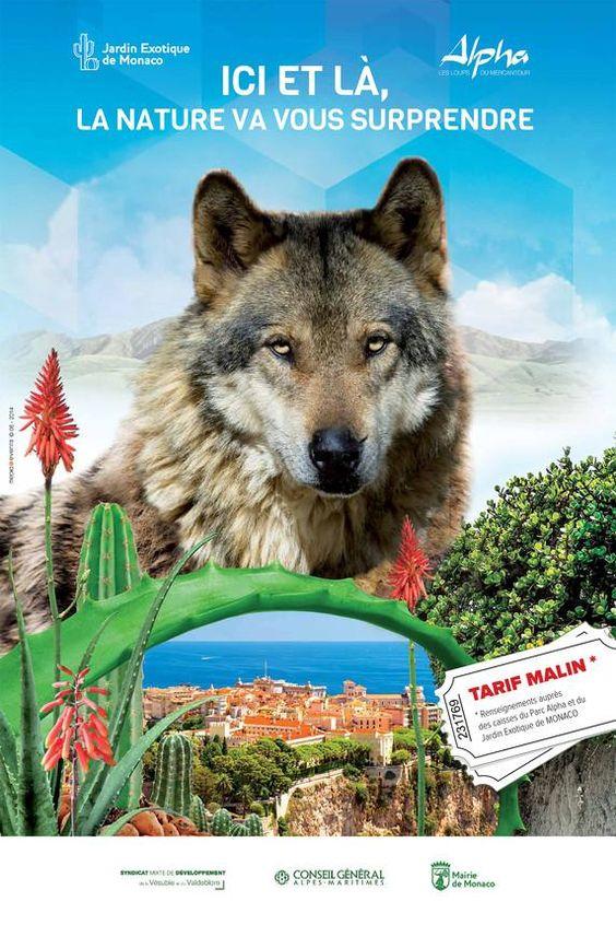 « À la découverte des loups. » Expo à découvrir jusqu'au 15/9 au Jardin Exotique de Monaco > http://ow.ly/zYo75 pic.twitter.com/0mLcmpZBPb
