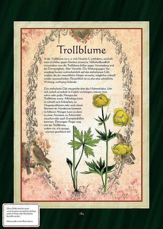 Trollblume