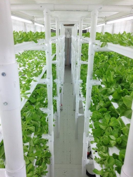 Shipping container LED farm: