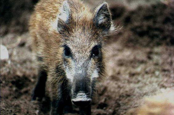 Argentina+Fauna | ... Argentina no está adecuadamente legislada e implementada., tarea que