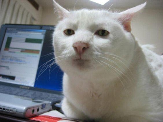 Espressione da gatto: la classifica delle più buffe