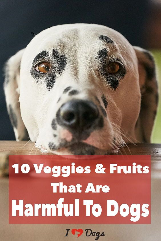 10 Veggies Fruits That Are Harmful To Dogs Embrace Pet