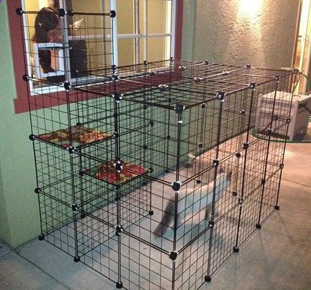 Build a do it yourself outdoor cat enclosure or run i for Having an indoor cat