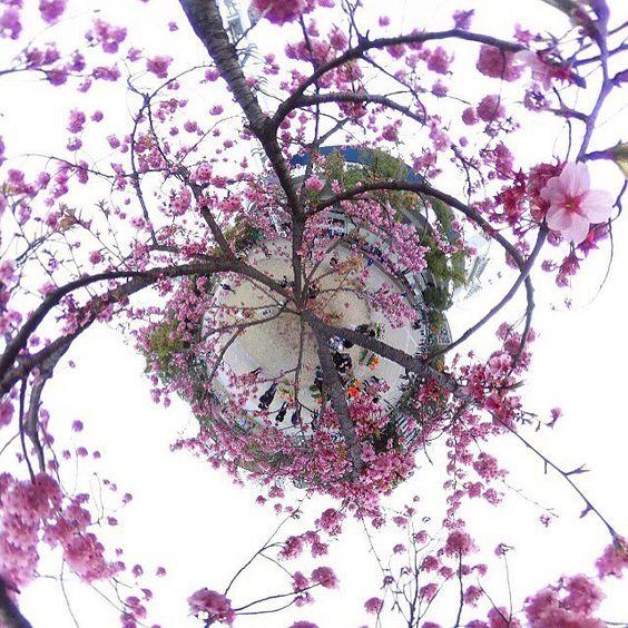 #theta360 #littleplanet #桜 #cherryblossom #横浜スタジアム #ハマスタ #横浜公園 by tkk.360album