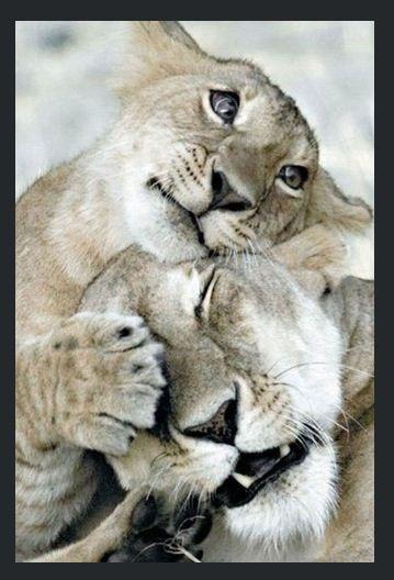 Baby tijger: