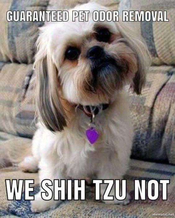 Pet Urine Cleaning Oahu Hawaii Shih Tzu Pet Urine Dog Breeds