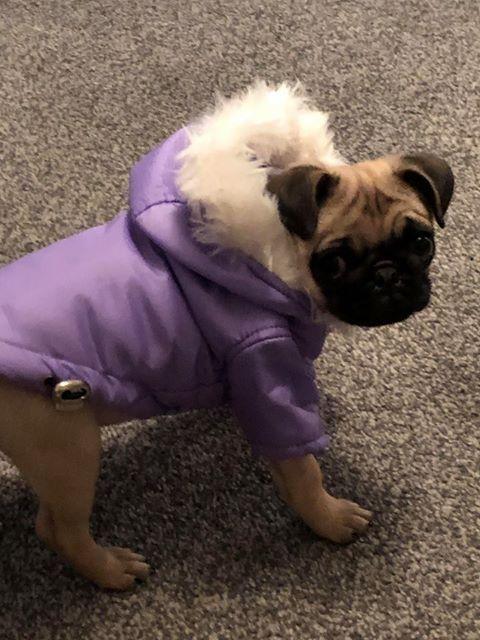 Pin On Dog Clothing