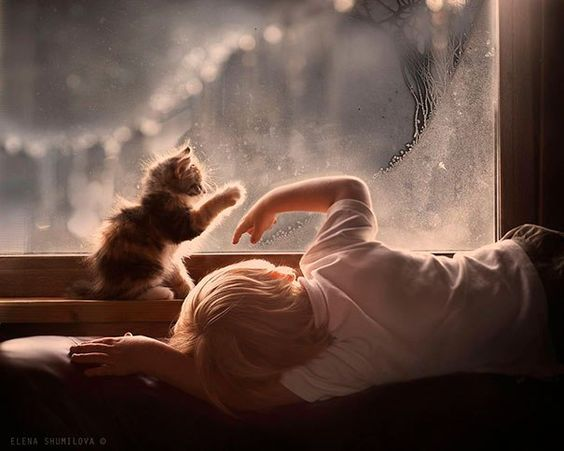 Child playing with kitten in frosty window. #serene #quiet #kitten #childhood
