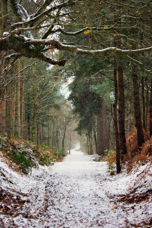"justcallmegrace: "" Delamere Forest Park, Cheshire, England """