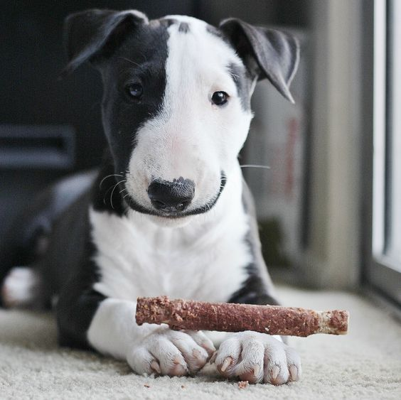 Pitty pup.  Every baby deserves love kindness and wonderful treats!
