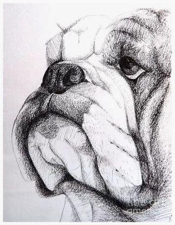 Pin By Beth Pittman On Uga Bulldog Drawing Bulldog Art