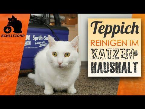 Teppich Reinigen Im Katzenhaushalt Kotzflecken Und Katzenhaare
