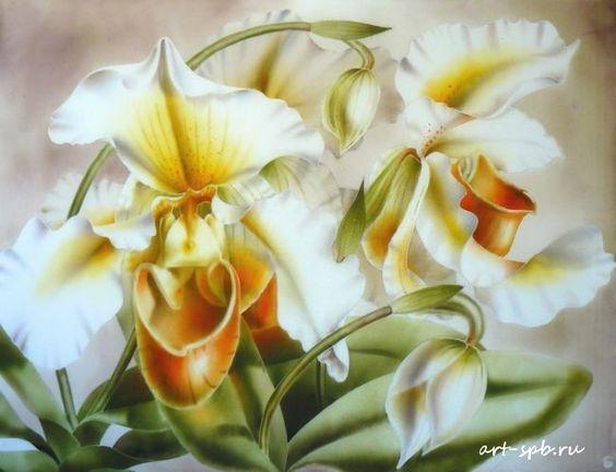 Орхидеи Венерин башмачок