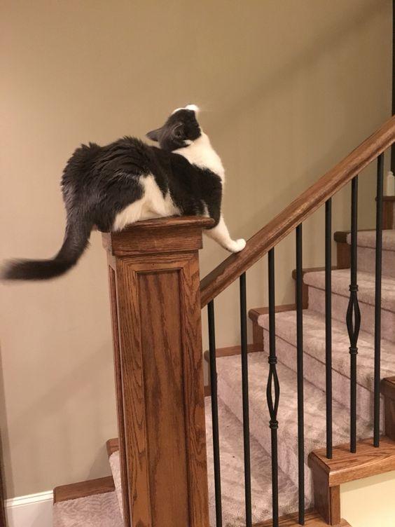 Cat Master chief master of his domain
