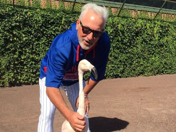 """On the """"Which MLB Manager Are You?"""" quiz I got: Joe Maddon! I don't think that's a bad thing! #LetsGoCubs"""