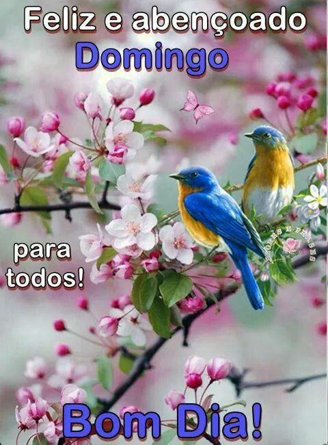 Bom Domingo Para Nos Todos Com Imagens Mensagens De Bom Dia