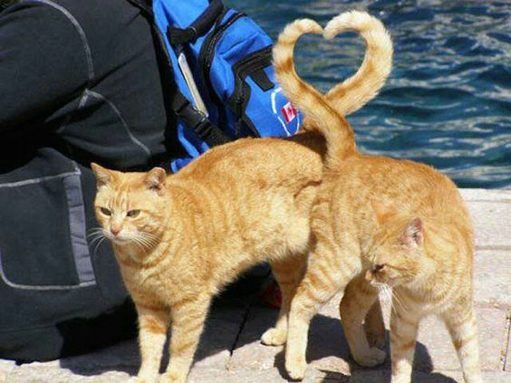 Love is in the tail.